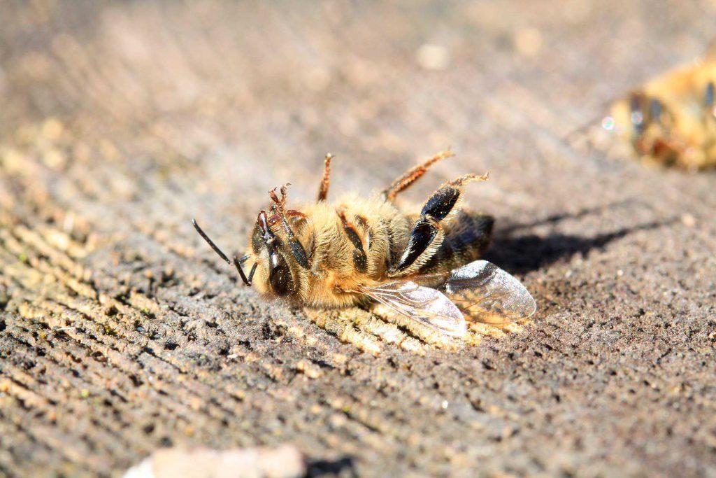 Insect Extinction.Deforestation, Destruction of habitat