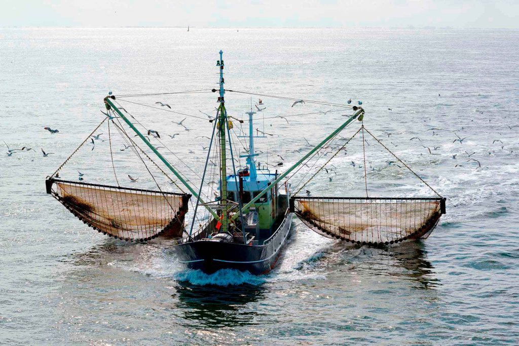 Overfishing. Air, Land, River and Ocean Pollution