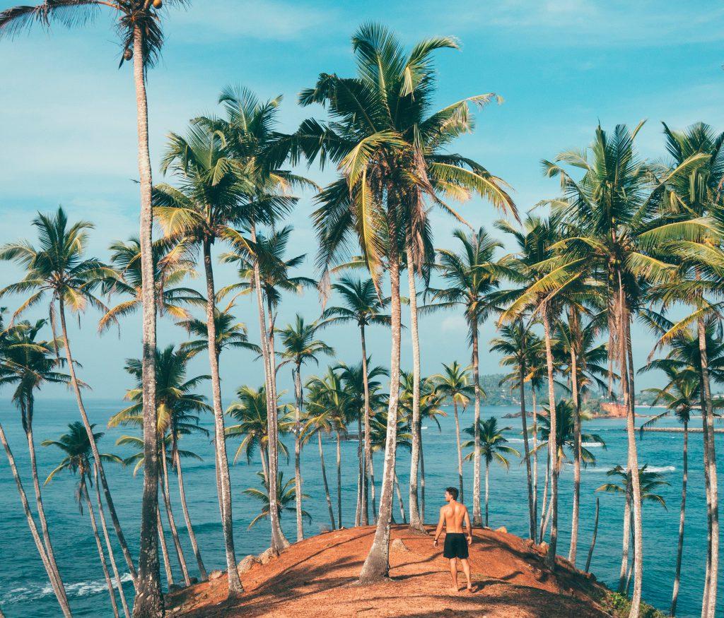 Palm oil. Deforestation, Destruction of habitat