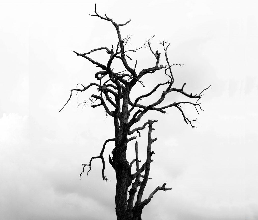 Plant and Tree Extinction.Deforestation, Destruction of habitat