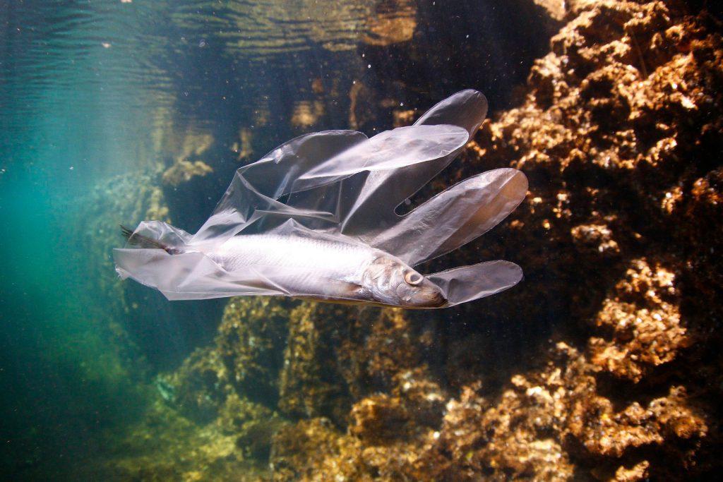 Plastics in fish